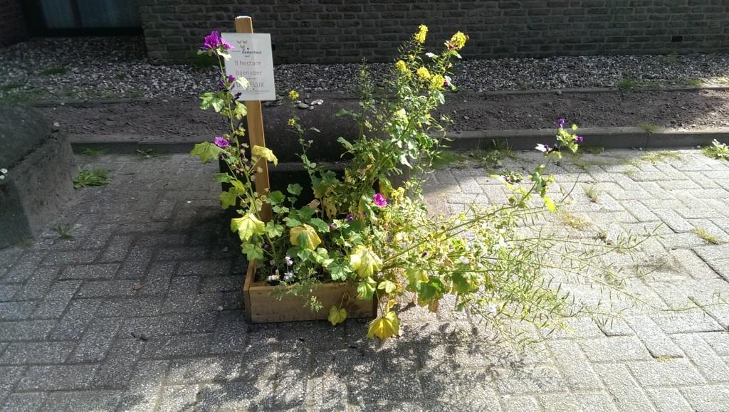Bijenlint Slotjesveld (2)