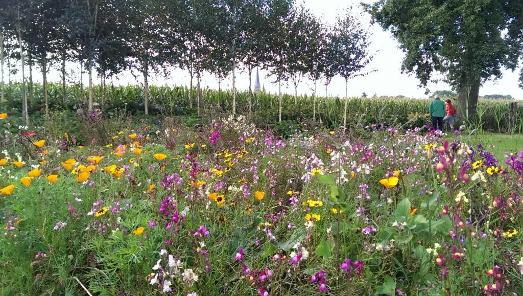 Open tuin Den Hout (1)