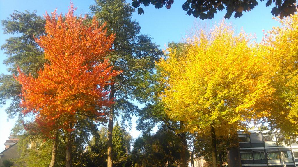 herfstbetovering